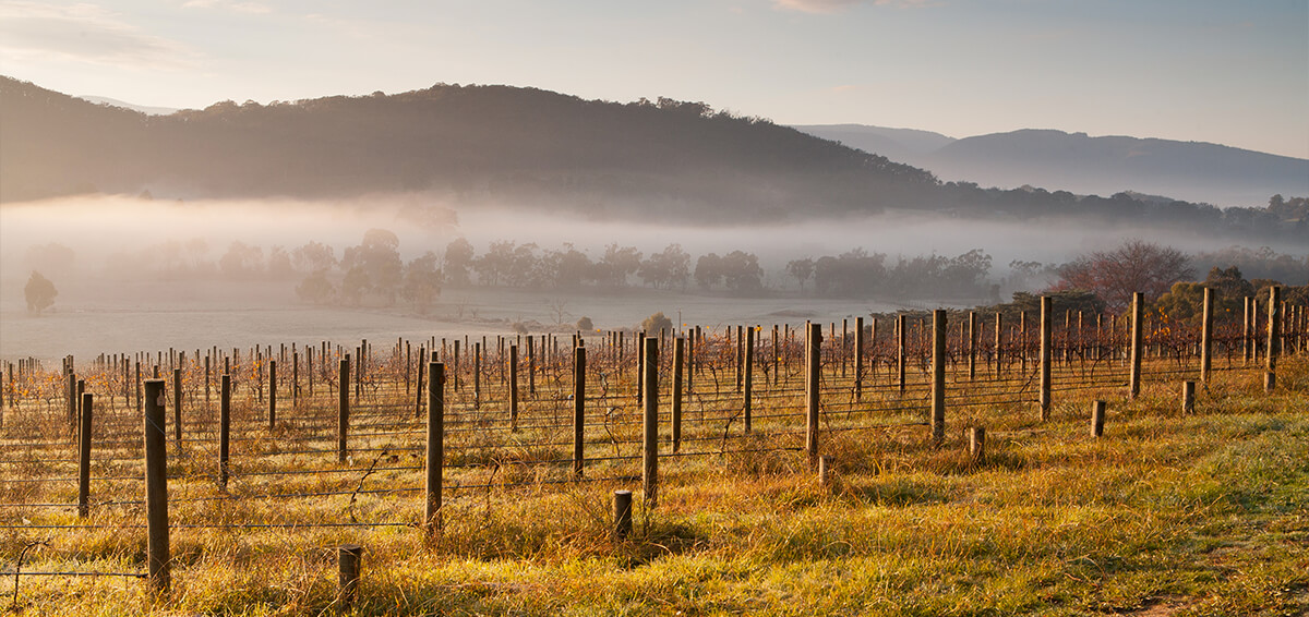 Melbourne winery with low lying fog